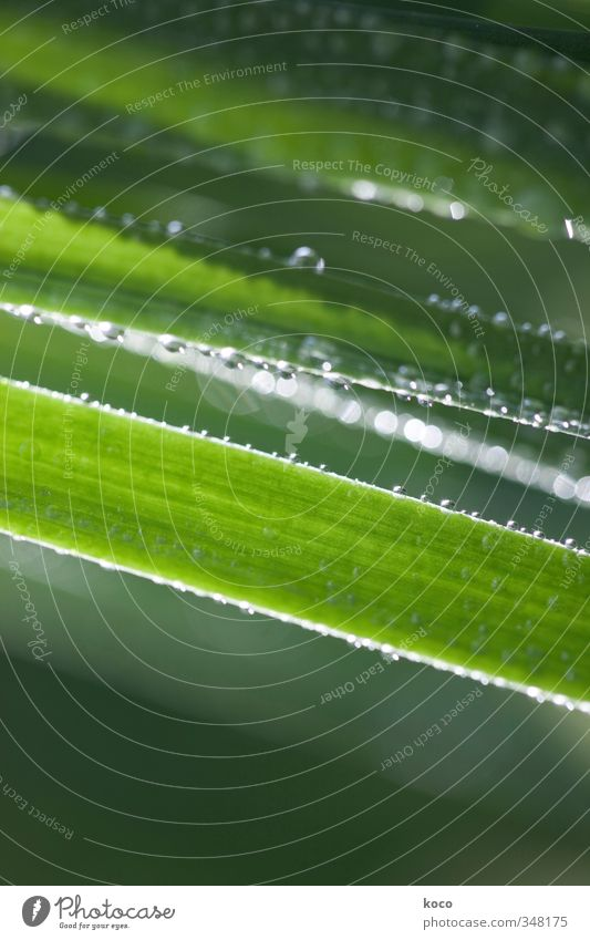 Wassertröpfchen. noch mehr. Natur grün weiß Sommer Pflanze Umwelt Gras Frühling natürlich glänzend Wachstum leuchten frisch nass ästhetisch