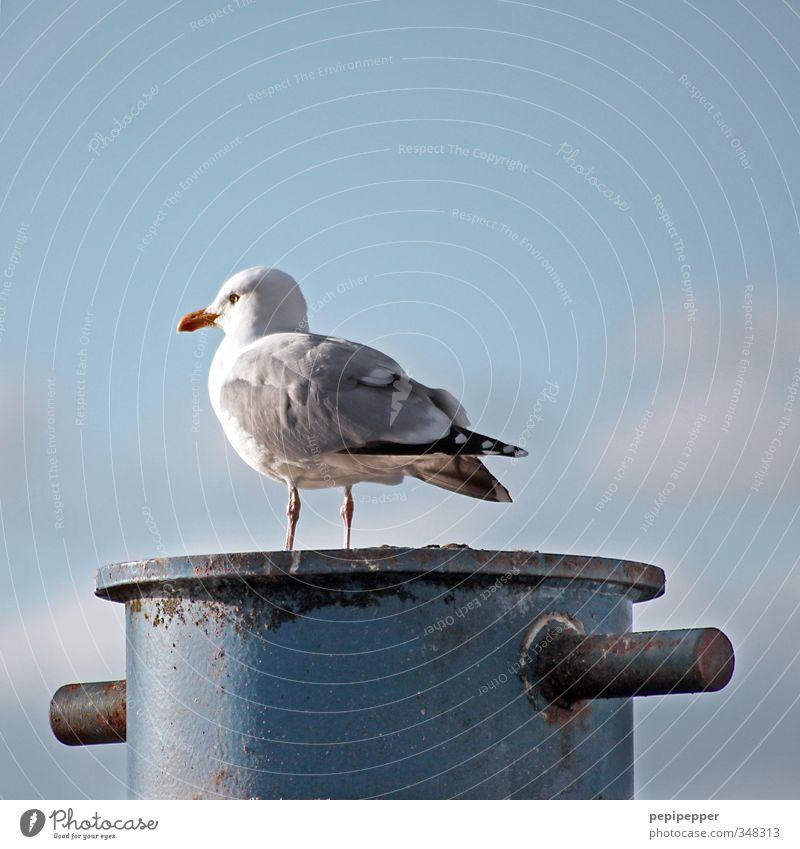 -O__ Ferien & Urlaub & Reisen Tourismus Ausflug Freiheit Kreuzfahrt Sommer Himmel Wolken Küste Fischerdorf Hafen Schifffahrt Poller Tier Wildtier Vogel Taube