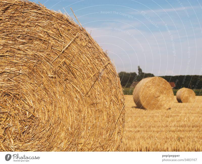 Kornkreise, runde Strohballen auf dem geernteten Feld liegend Himmel Sommer Landwirtschaft Ernte Natur Getreide gelb Wärme Heuballen blau Landschaft Herbst