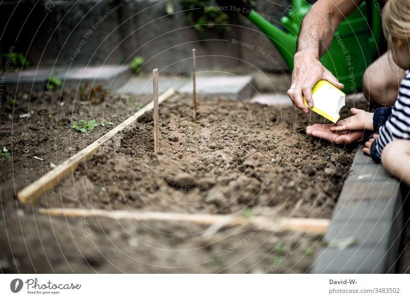 Vater und Tochter legen zusammen ein kleines Beet an Mädchen Mann Kind Kindheit Hände Finger anonym niedlich gemeinsam Pflanzen Erde Samen Gemüse anlegen