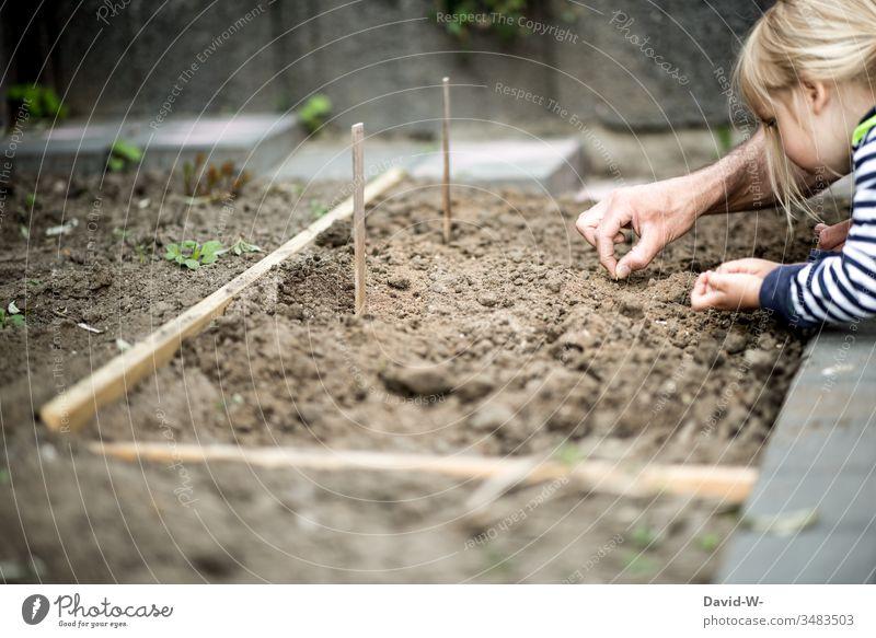 Mädchen und Vater bepflanzen Beet mit Samen Kind nachhaltig Nachhaltigkeit Kleinkind lernen Umwelt umweltfreundlich Garten Gartenpflanzen anpflanzen sähen