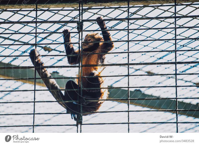 Affe im Zoo eingesperrt im Käfig verzweifelt Tier Angst traurig ausbrechen gitterstäbe Gefängnis gefangen ausgangssperre corona coronavirus tierpark Gitter