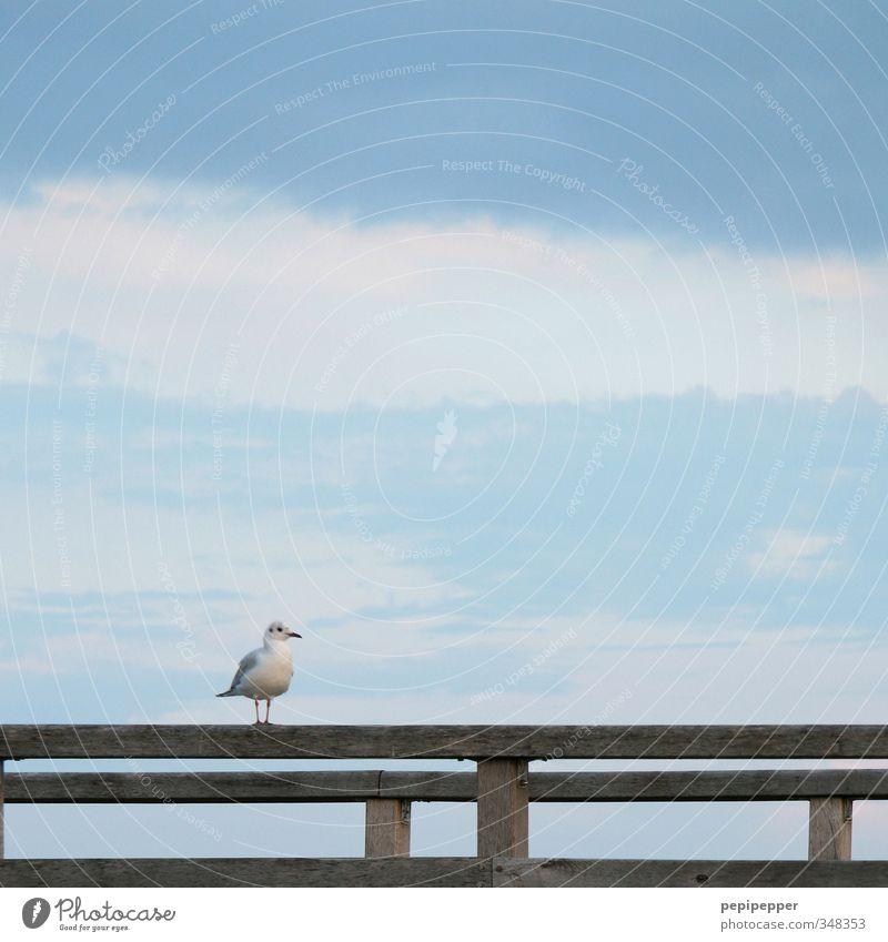 ==P====== Himmel Ferien & Urlaub & Reisen blau Sommer Meer Tier Wolken Strand Küste Holz Linie Vogel Wildtier Tourismus warten stehen