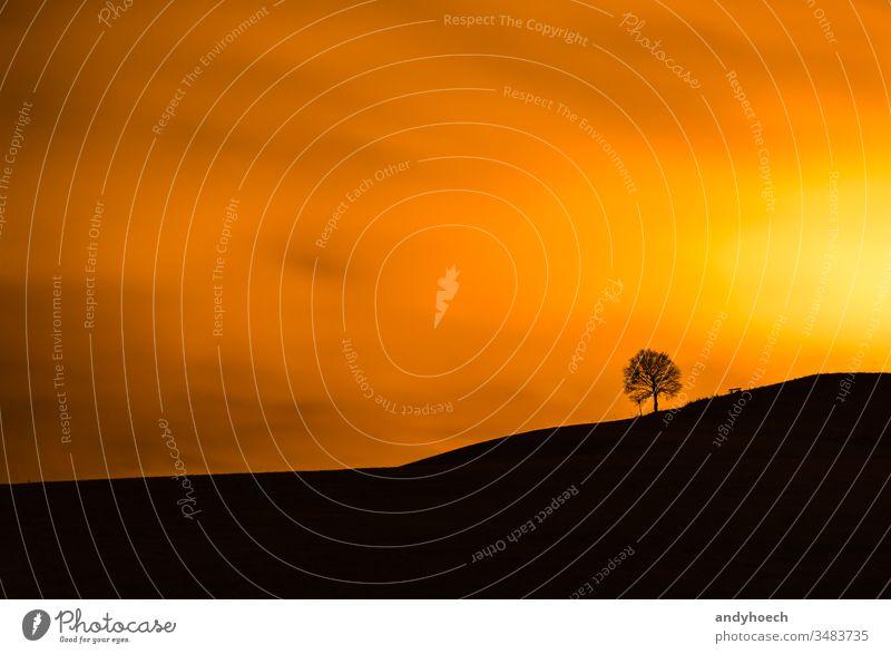 Die Sonne brennt einen Baum und eine Bank nieder Hintergrund schön Schönheit in der Natur schwarz Wolkenhimmel wolkig Farbe Textfreiraum dramatisch