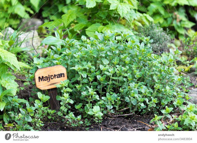 Majoran auf natürliche Weise Rübe Buchse Bildunterschrift Bodenbearbeitung Öko Landwirtschaft Lebensmittel Fotolia frisch Garten grün Gesundheit Kraut