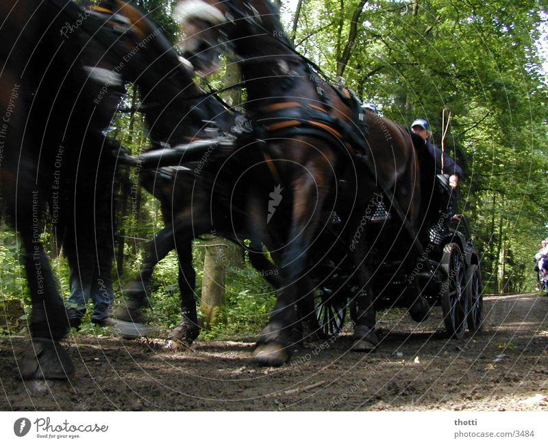 speed Pferdekutsche kutschieren Kutscher Viergespann Bewegungsunschärfe Eile Dynamik