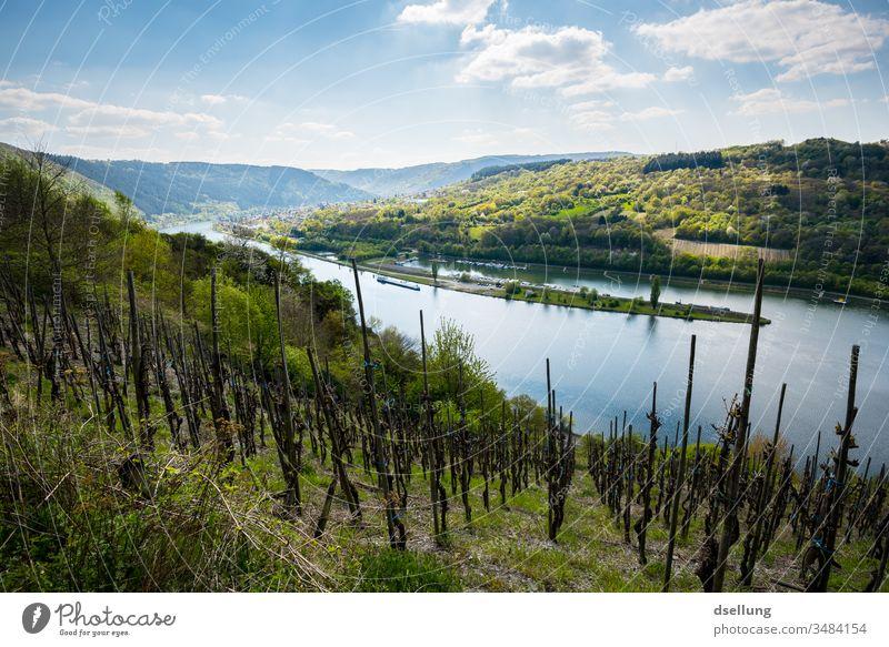 Blick über grüne Weinberge an der Mosel, die beginnen zu sprossen Freiheit panorama Umweltschutz Klimaschutz einladend Genuss genießen bewundern Überblick