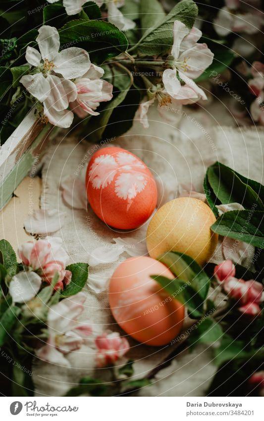 Ostereier und Apfelbaumblüten farbenfroh Hintergrund Blume Lebensmittel Natur Dekoration & Verzierung Tradition Saison weiß Blütenblatt schön Frühling Feiertag