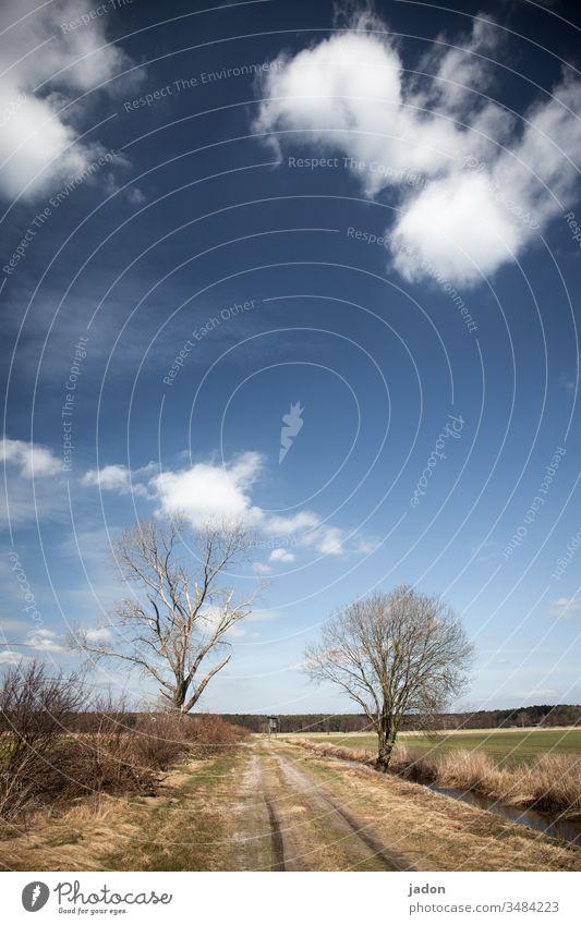 wege gehn wo bäume stehn. blau-weisses dach, das land liegt flach. kein vogel am himmel, kein menschengewimmel. kurzes gras und stille stehn, sonst nichts.
