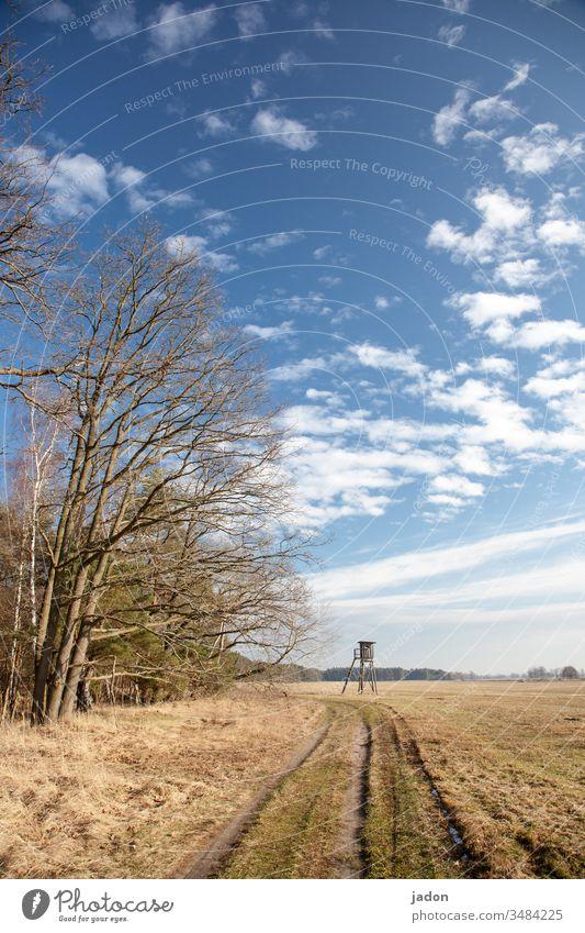 landschaft mit weg, bäumen und hochsitz,  bis zum horizont reichend. Landschaft Feld Ackerland feldweg Natur Landwirtschaft Ackerbau ländlich grün Gras