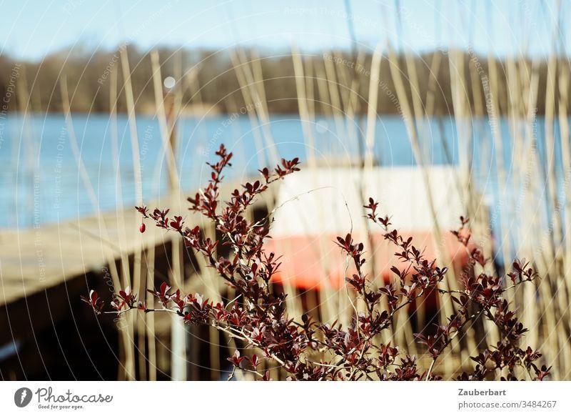 Rotes Motorboot am Steg eines Sees, davor eine dunkelrote Pflanze und Schilfgras Boot Zweige Sonne Frühling warten Normalität Wasser Wasserfahrzeug Erholung