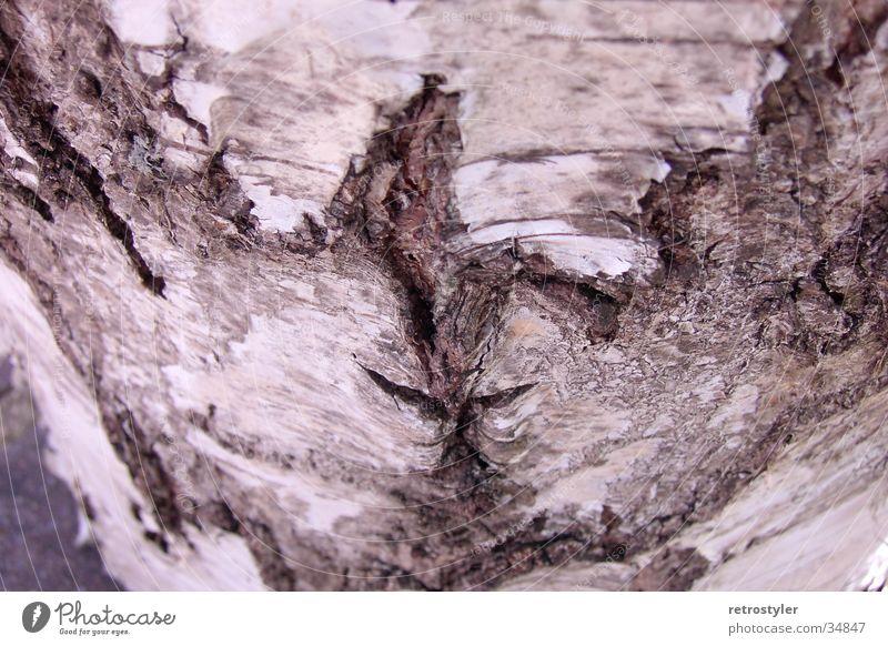 Baumrinde Muster Birke Strukturen & Formen Makroaufnahme Nahaufnahme