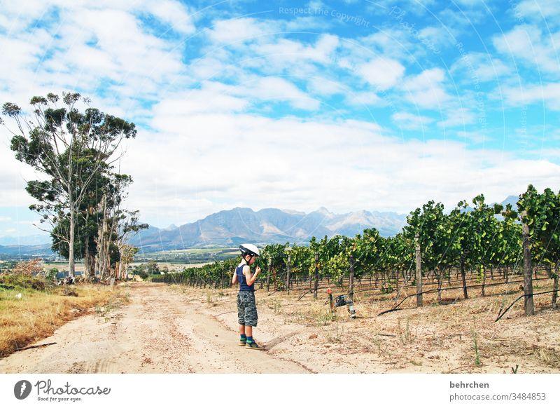 bikes 'n wines Sonnenlicht Kontrast Licht Tag Außenaufnahme Farbfoto Wege & Pfade schön fantastisch außergewöhnlich genießen Erholung Stellenbosch Südafrika