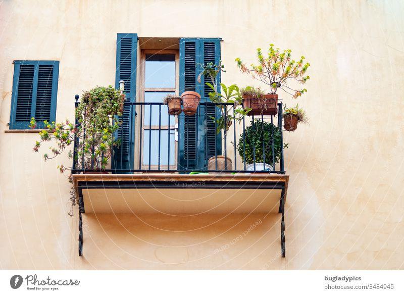 Mediterraner Balkon mit Metallgeländer auf dem Pflanzen in Tontöpfen stehen. Die Fassade ist hell terrakotta gestrichen und die Schlagläden von Balkontür und Fenster sind dunkelblau oder petrol