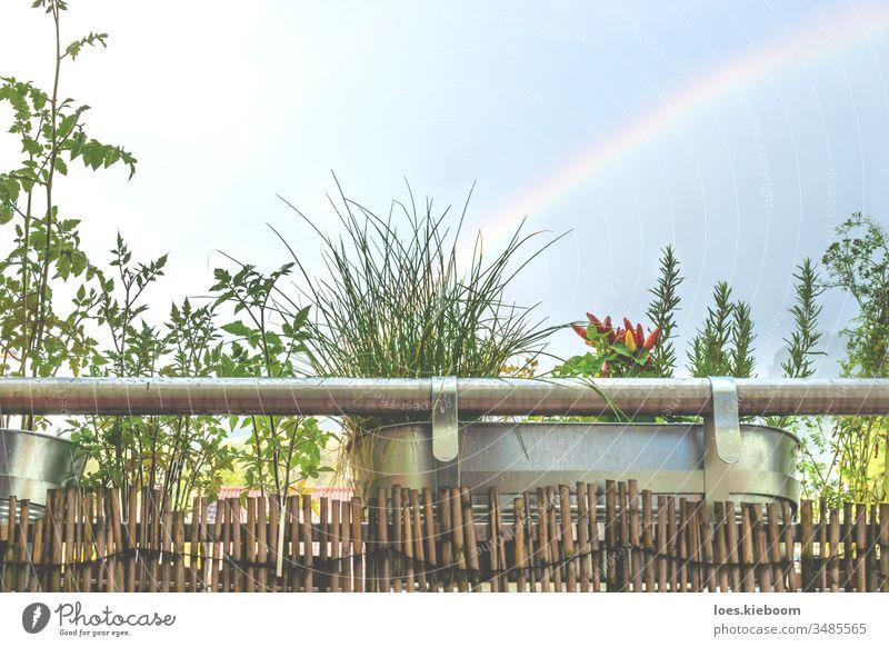 Balkon-Heimgarten mit Kräutern und Jungpflanzen mit Regenbogen Garten Kraut grün Großstadt Natur Pflanze Blume heimwärts Haus natürlich im Freien Gemüse