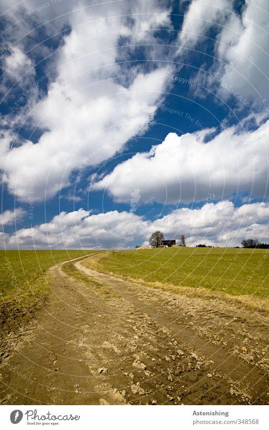 hinauf Umwelt Natur Landschaft Pflanze Erde Luft Himmel Wolken Horizont Frühling Wetter Schönes Wetter Baum Gras Wiese Feld Hügel Wege & Pfade blau braun grün