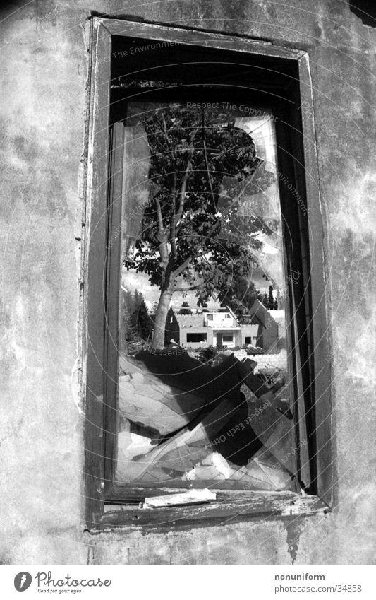 Zerstörung Baum Haus Fenster Architektur Glas Zerstörung Demontage Bauschutt