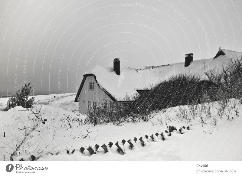 Zeitumstellung I der Winter steht vor der Tür weiß Wasser Baum Einsamkeit Landschaft ruhig Strand Haus schwarz dunkel kalt Schnee Küste Holz Luft