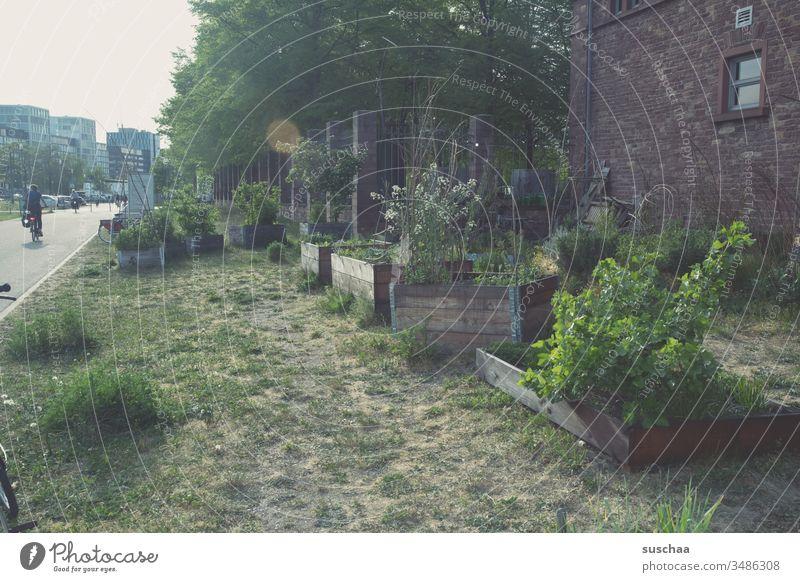 urban gardening Stadt Stadtbild Wegesrand Fußgängerweg Garten Anbau Gartenbau Landleben Stadtleben Gegensatz Anbaufläche Gärtchen Gemüseanbau Außenaufnahme Beet