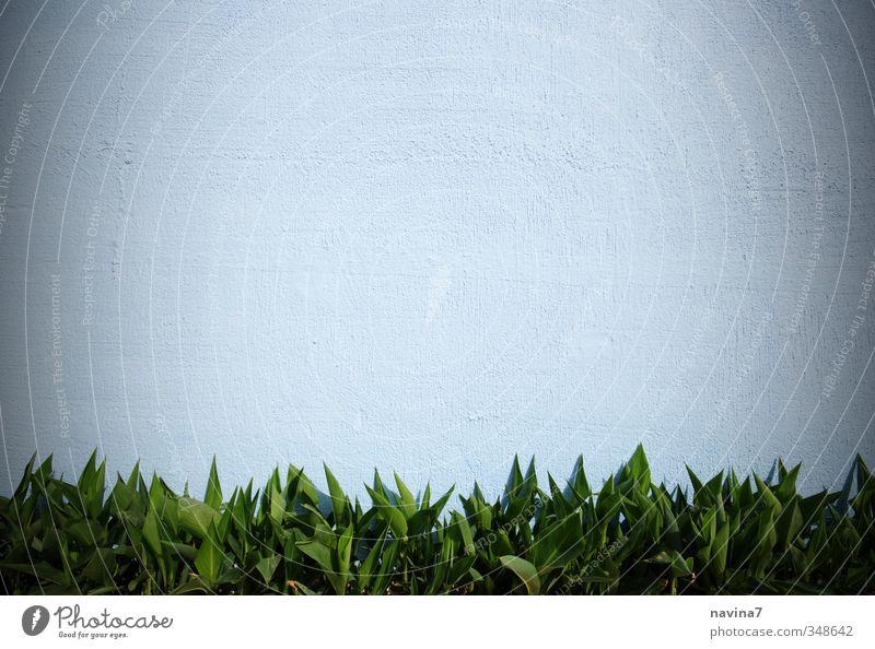 Blätterwand Sommer Pflanze Gras Farn Blatt Grünpflanze Topfpflanze exotisch Garten Stein grün weiß Wachstum Mauer Mauerpflanze Farbfoto Außenaufnahme