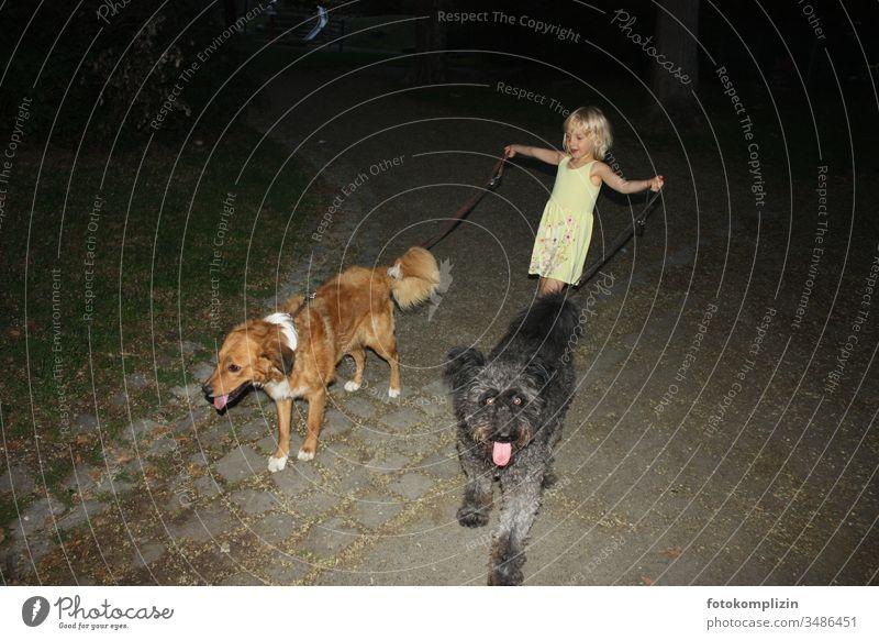 kleines Mädchen führt zwei Hunde an Leinen Tiertrainerin Haustier hundetraining Hundetrainerin Hundetraining niedlich Tierliebe domptieren trainieren