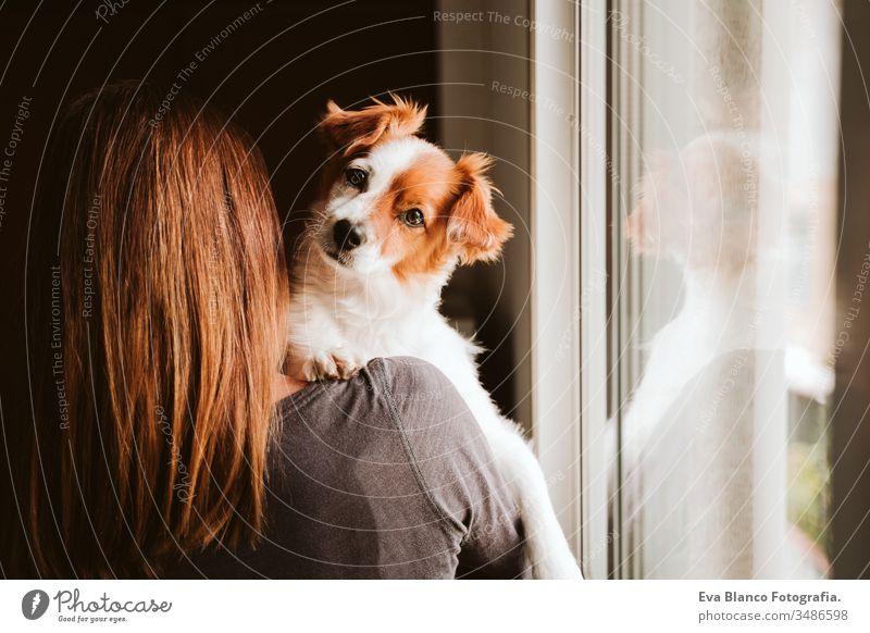 junge Frau und ihr süßer Hund zu Hause am Fenster. Rückansicht heimwärts im Innenbereich Kuss Liebe Zusammensein Zusammengehörigkeitsgefühl tagsüber Kaukasier