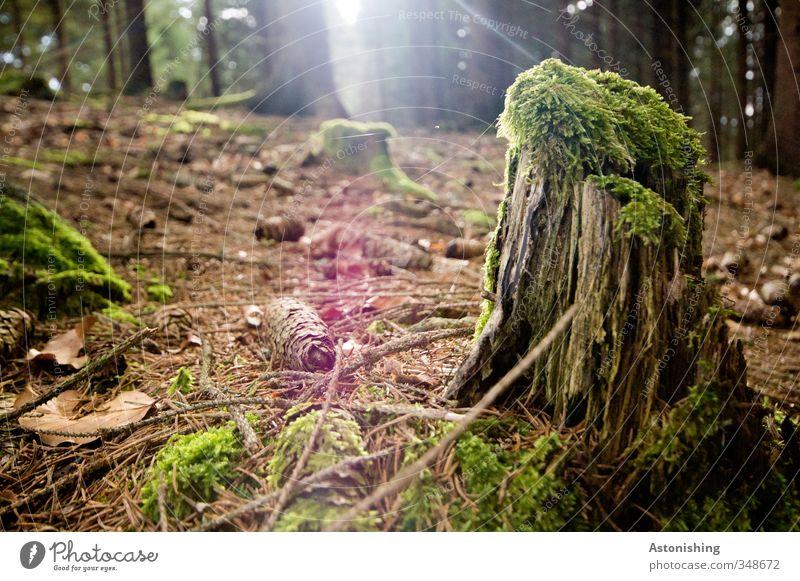 der vorletzte Rest des Baumes Natur grün Pflanze Sonne rot Landschaft Blatt Wald Umwelt Wärme Gras Frühling Holz klein braun