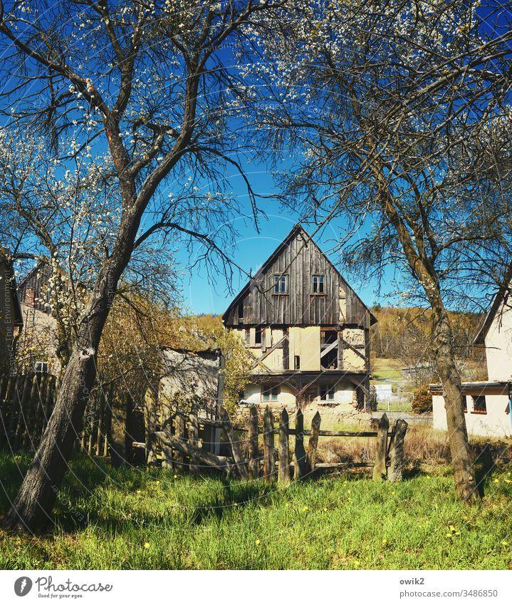 Lücke im Zaun Dorf Lausitz Sachsen Wiese Haus Ruine alt Holz Frühling Bäume Baumblüte Sonnenlicht Wolkenloser Himmel Außenaufnahme Menschenleer Farbfoto Tag