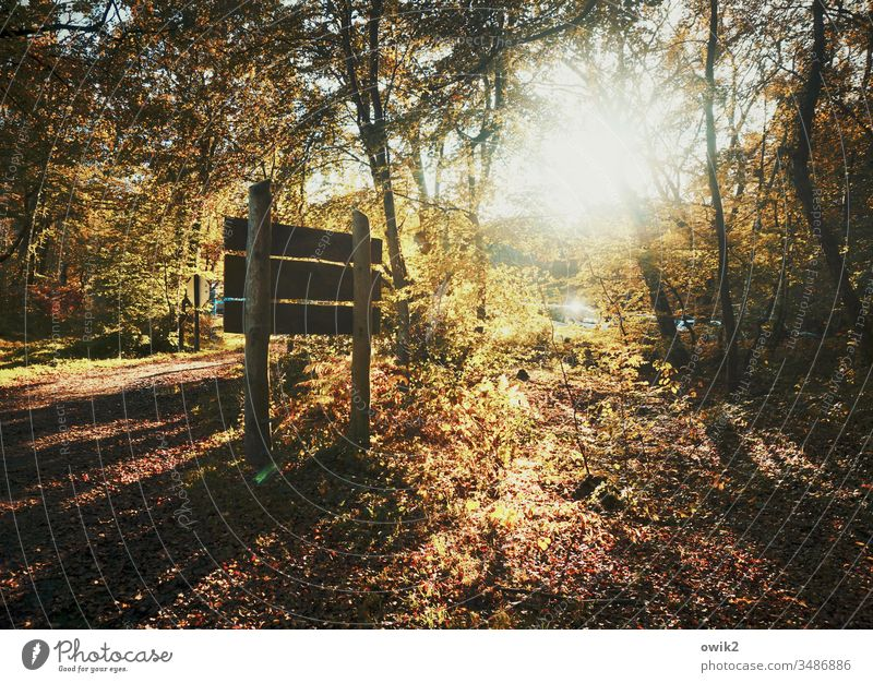 Darß, Dreieichen Wald Schild Herbst Lichtung Sonne Gegenlicht leuchtend strahlend Sonnenlicht lichtdurchflutet Bäume Sträucher Waldboden Wege & Pfade Idylle