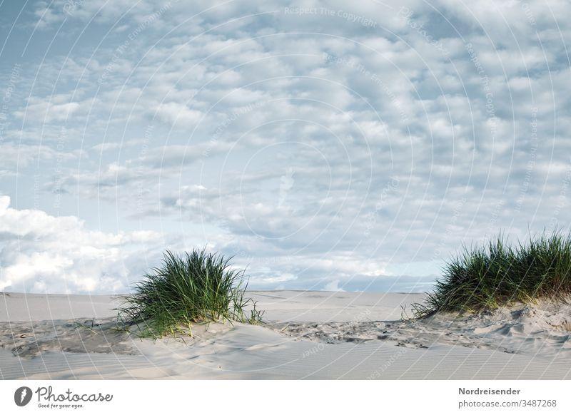 Sand Dünengras und Schäfchenwolken Ostsee Nordsee Strand Küste Meer Ozean Weite Horizont Urlaub Tourismus verweht Strandhafer maritim Wanderdüne Landschaft