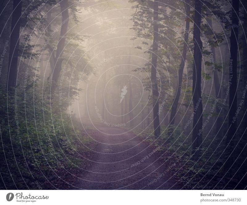 Der Wald erwacht Spaziergang wandern Umwelt Natur Tier Frühling Nebel Pflanze Baum Sträucher Wegbiegung Wege & Pfade entdecken Erholung gehen Blick schön blau