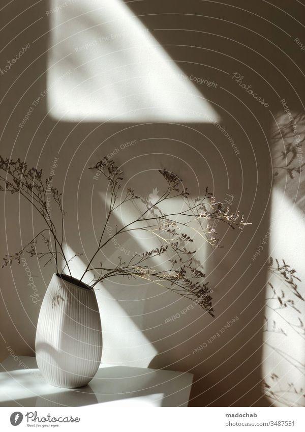 Vase mit Trockenblumen und Schattenspiel Pflazen Blumen Zuhause Wand Deko Dekoration & Verzierung schön Abstrakt Innenaufnahme Menschenleer Häusliches Leben