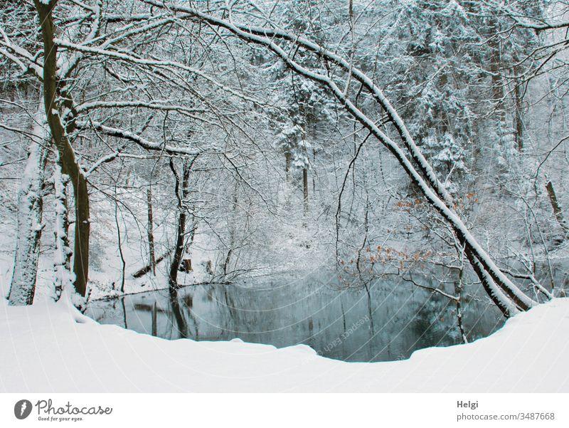 Winter am Blauen See im Teutoburger Wald Waldsee Blauer See Schnee Idylle Wasser Kälte Baum Spiegelung blau weiß grau schwarz Landschaft Natur Umwelt kalt