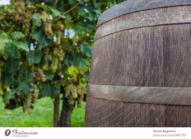 Weingut Italien Weinrebe Traube Weinberg Feld Toskana Lauf Saison Herbst toskanisch Ackerbau Landwirtschaft Ackerland Italienisch Bauernhof Szene Chianti