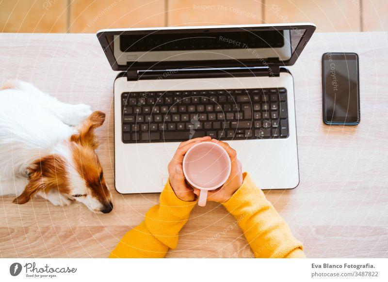junge frau arbeitet zu hause am laptop, trägt schutzmaske, daneben niedlicher kleiner hund. arbeiten sie von zu hause aus, bleiben sie während des coronavirus covid-2019 concpt sicher