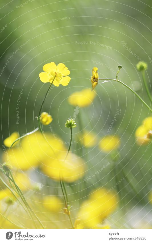 kissing flowers Natur grün Sommer Pflanze Farbe Blume gelb Wiese Wärme Gras Frühling Blüte Garten hell Wachstum leuchten