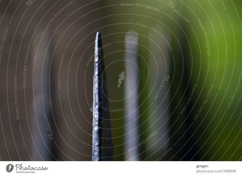 Königin der Schwerter Umwelt Spitze grün grau-braun Scharfer Gegenstand Reflexion & Spiegelung fokussieren 1 verschwunden diffus Unschärfe uneben streben