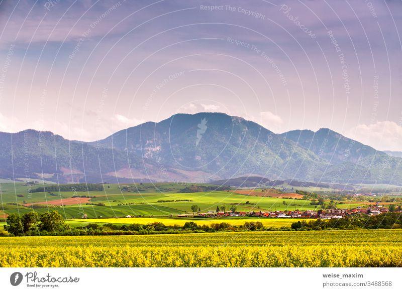 Frühlingsgelbe Rapsfelder und grüne Wiesen im Tal der Tatra. Ländliche Szene der Slowakei. Blühende Frühlingslandschaft. Feld Berge u. Gebirge Hügel Gras