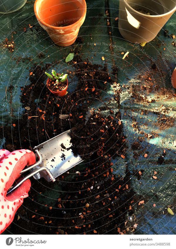 Was Mütter tun am Vatertag. Garten Gartenarbeit Gartenhandschuhe Schaufel Erde Pflanze hobbygärtner Terrakotta Topfpflanze Farbfoto Freizeit & Hobby Natur