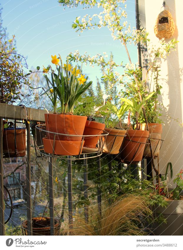 Grüner Daumen Balkon Balkonpflanze Gartenarbeit Gartenarbeit machen Gärtner Pflanzen Tontopf sonnig grün braun Terrakotta Natur Frühling Nahaufnahme Stil