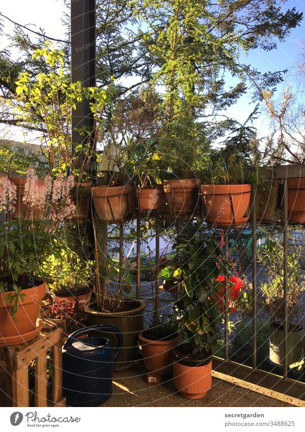 Und ewig lockt der Balkon. Balkonien gärtnern Frühling Außenaufnahme zuhause Lockdown Balkonbepflanzung öko Freizeit & Hobby Gartenarbeit grün Natur Sommer