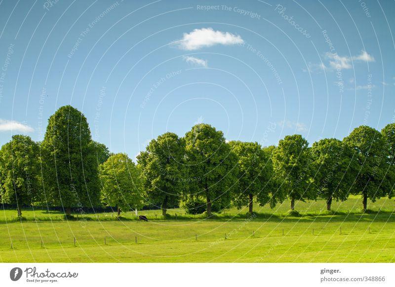Gut aufgestellt. Umwelt Natur Landschaft Himmel Wolken Frühling Schönes Wetter Wärme Pflanze Baum Grünpflanze Wiese Feld Kuh 1 Tier stehen Wachstum blau grün