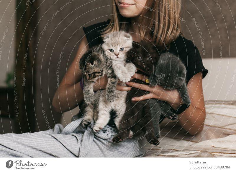 Das Kind hält schöne britische Kätzchen in verschiedenen Farben in den Händen von heimisch Porträt schwarz Fell klein Säugetier wenig weiß heimwärts Welpe