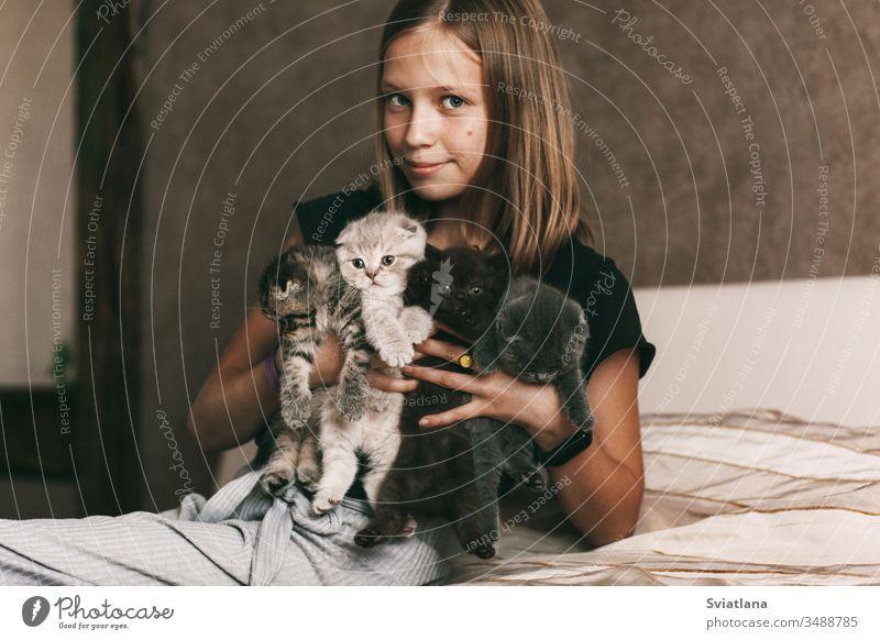 Das Kind hält schöne britische Kätzchen in verschiedenen Farben in den Händen von Hintergrund Familie Baum Liebe Lebensmittel Mann Mädchen Haus Katze Natur