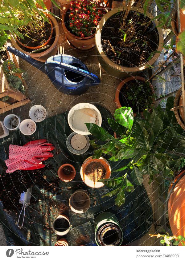 Kein Platz für Textfreiraum Balkon Balkonien gärtnern Frühling Außenaufnahme zuhause Lockdown Balkonbepflanzung öko Freizeit & Hobby Gartenarbeit grün Natur