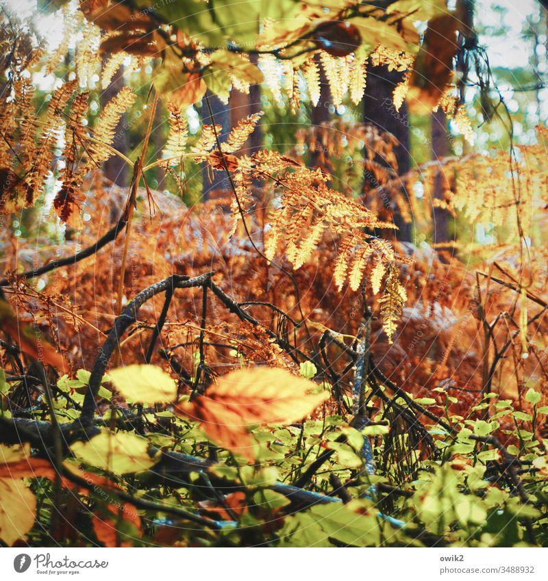 Wald, wild Darß Blätter Zweige durcheinander Baum Zweige u. Äste Außenaufnahme Pflanze Menschenleer Umwelt Ast Herbst grün braun golden orange gelb bunt Natur