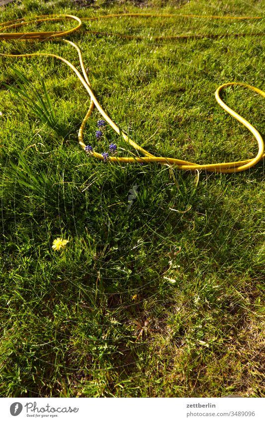 Gartenschlauch gartenschlauch wasserschlauch bewässerung blume blühen blüte erholung ferien frühjahr frühling trockenheit gras kleingarten kleingartenkolonie