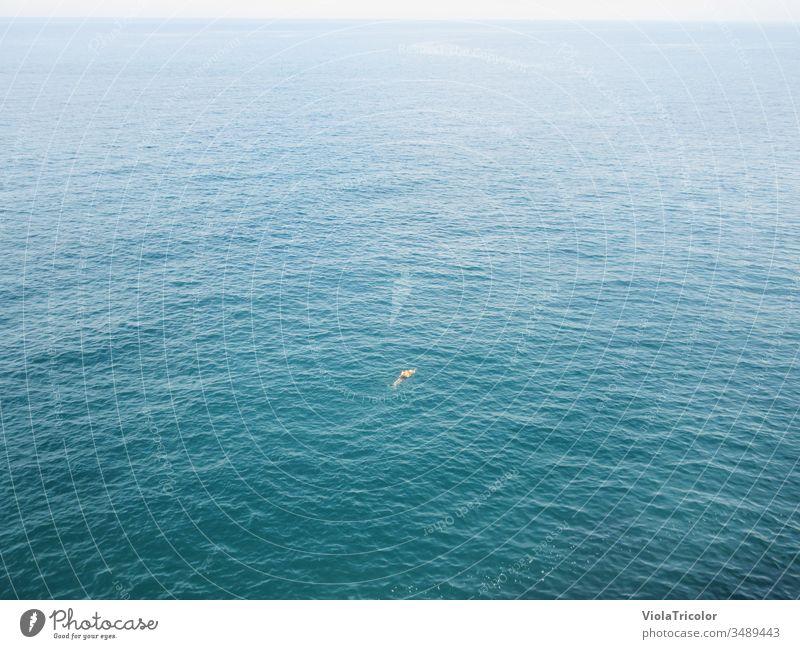einsamer Schwimmer im Meer Schwimmen Wasser allein frei Abstand Freiheit Sport Wassersport Weite blau Horizont Urlaub Vogelperspektive Ferien & Urlaub & Reisen