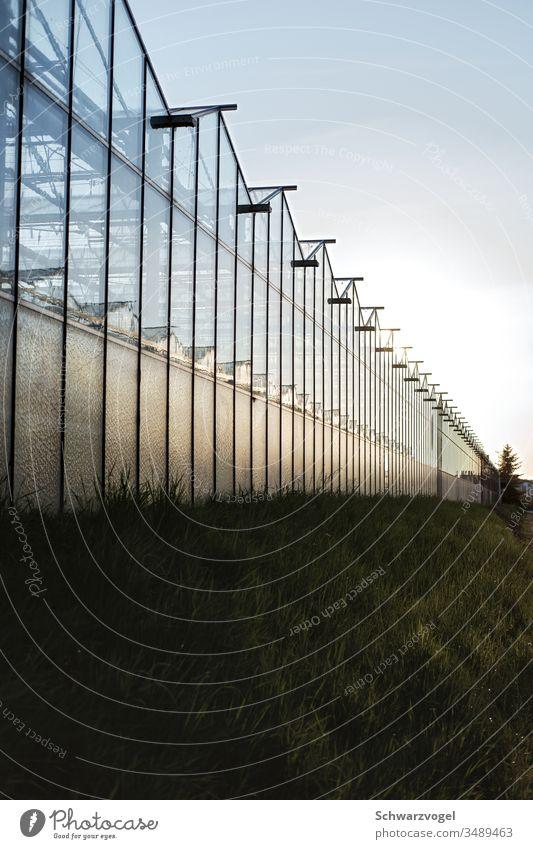 Gewächshaus in der Abenddämmerung treibhaus Glasfassade wachsen züchten Pflanze Botanik organisch Natur grün kultivieren Flora Ökologie Treibhauseffekt glashaus