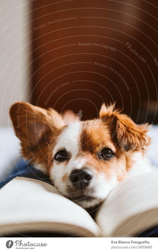 junge Frau und Hund zu Hause auf dem Bett liegend. Liebe, Zweisamkeit und Haustiere im Haus. Frau beim Lesen eines Buches. lesen heimwärts aussruhen schlafen